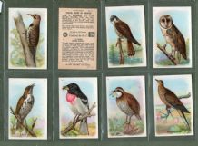 Useful Birds of America RareTrade cards set 1924 Church-Dwight